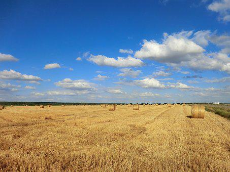 Wheat, Field, Harvest, Agro-industry, Straw, Sky