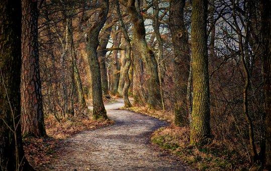 Tree, Nature, Landscape, Leaf, Park, Autumn