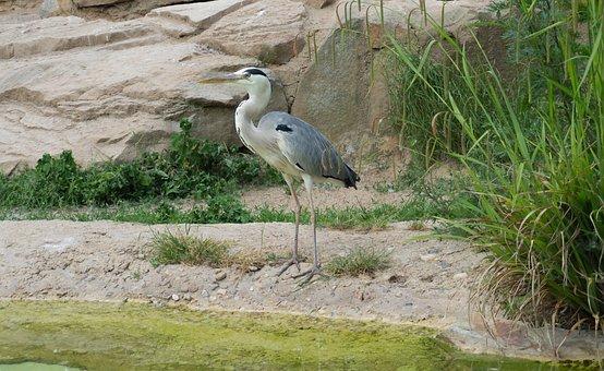 Nature, Bird, Animal World, Waters, Animal, Zoo