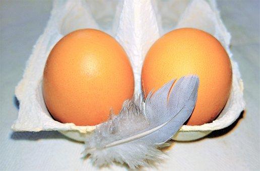 Egg, Chicken Eggs, Nutrition, Food, Bird Feather