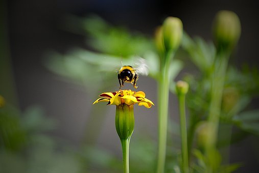 Insect, Nature, Outdoors, Bee, Flower, Flora, Summer