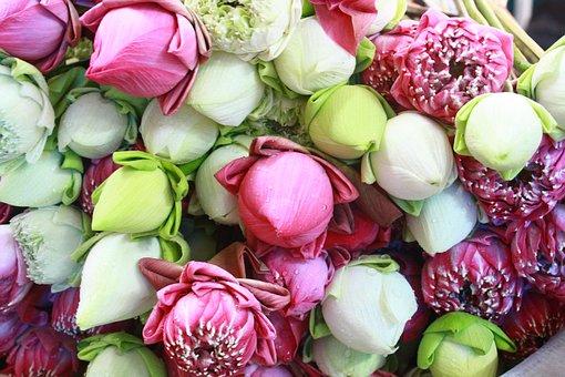 Flower, Leaf, Decoration, Food, Freshness, Floral