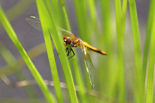 Insect, Nature, Dragonfly, Outdoors, Grass