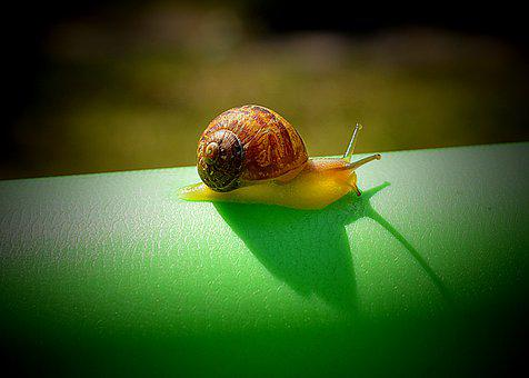 Snail, Slow, Nature, Invertebrate, Gastropod, Insect