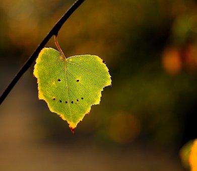 Leaf, Autumn, Smile, Yellow