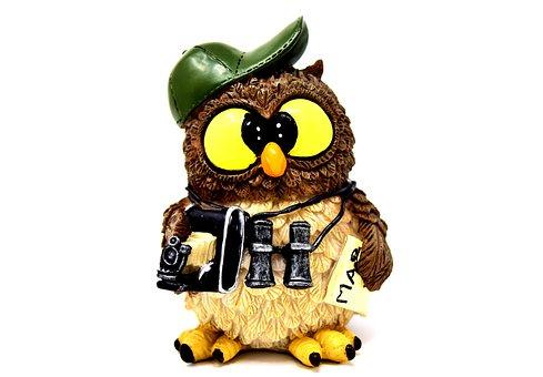 Owl, Photographer, Photograph, Tourist, Binoculars
