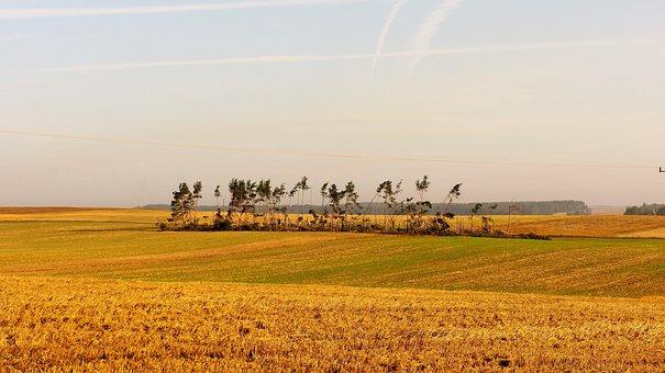 Field, Farm, Trim, Landscape, Nature, Tornado, Forest