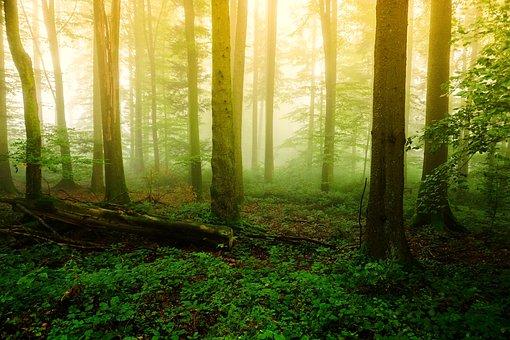 Wood, Nature, Fog, Tree, Dawn, Landscape, Leaf, Park