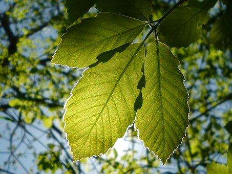 Leaf, Natural, Vivid, Wood, Outdoors, Plant, Seasonal