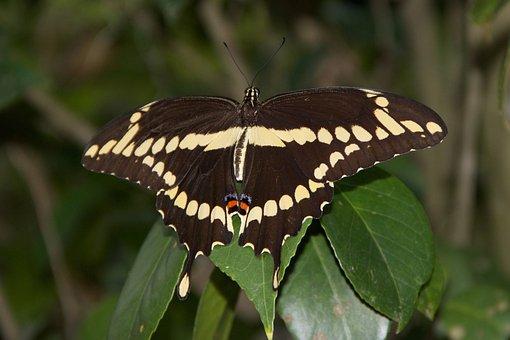 Nature, Insect, Butterfly, Evertebrat, Animal World
