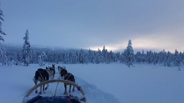 Snow, Winter, Cold, Frost, Wow, Doggies, Dog Sledding