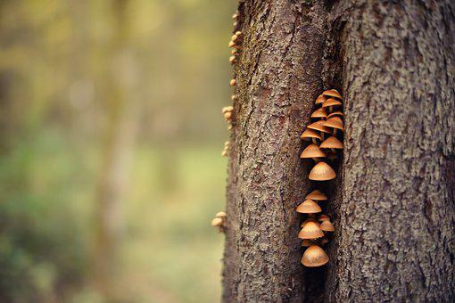 Wood, Nature, Tree, Bark, Bokeh, Mushrooms, Log