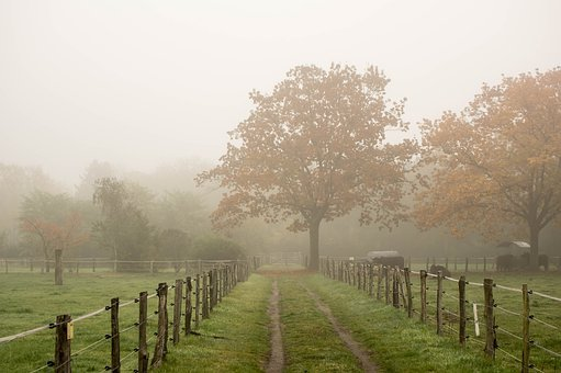 Fence, Fog, Tree, Landscape, Grass, Nature, Park