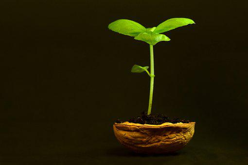 Plant, Small, Leaf, Nature, Growth, Tender, New, Frisch