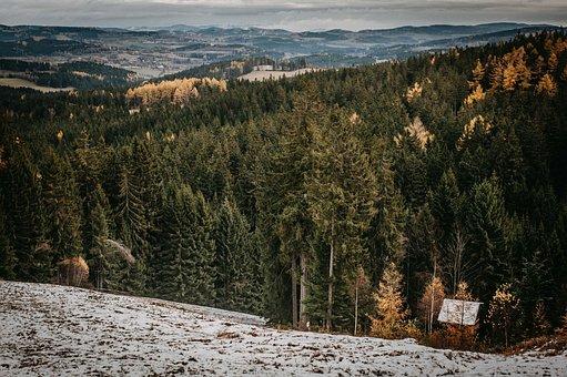 Winter, Landscape, Snow, šumava, Wintertime, Woods