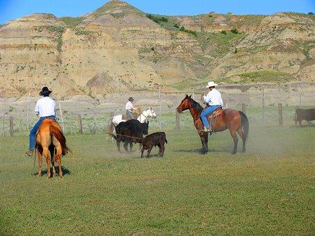 Horse, Mammal, Equestrian, Seated, Livestock, Farm