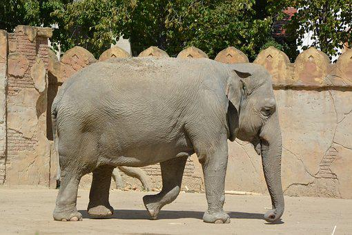 Animal, Mammal, Nature, Park, Elephant, Animal World
