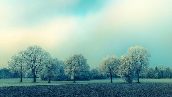 Tree, Nature, Landscape, Dawn, Grass, Blue, Ice, Winter