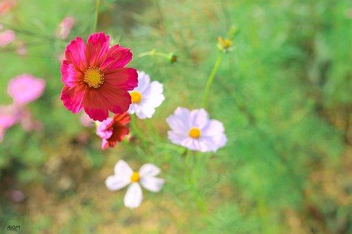 Flowers, Pretty, Beautiful Flowers, Nature, Green
