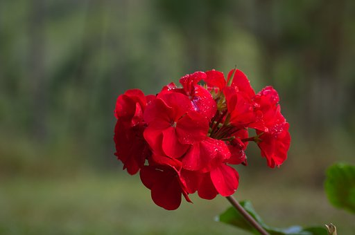 Nature, Flower, Flora, Outdoors, Summer, Color, Growth