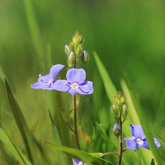 Nature, Flower, Plant, Leaf, Growth, Flowers, Garden