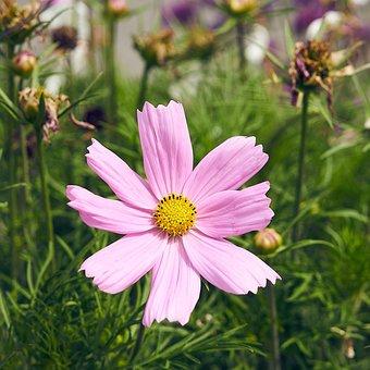 Nature, Flower, Summer, Plant, No Person, Petal, Garden
