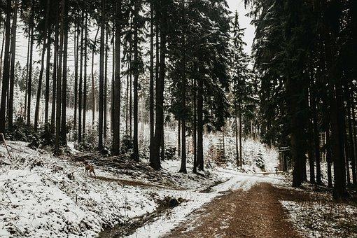 Winter, Landscape, Snow, Ještěd, Tree, Nature, Forest