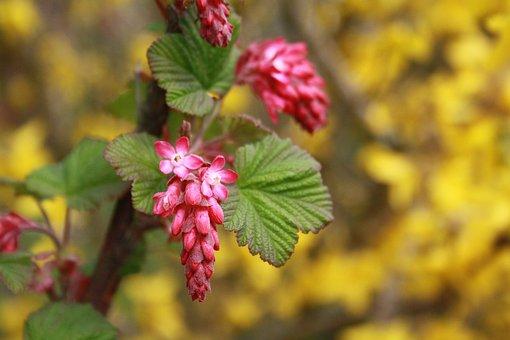 Nature, Leaf, Plant, Season, Tree, Summer, Growth