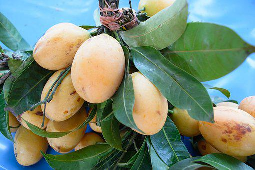 Star Apple, Mango, Plum, Yellow, Thailand Fruit, Fruit