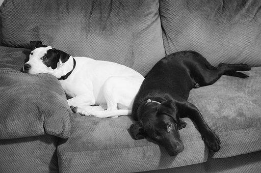 Dog, Canine, Mammal, Portrait, People, Pet, Puppy, Cute
