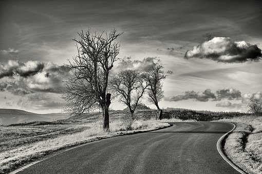 Tree, Landscape, Path, Road, Heaven, Dry Tree, Nature