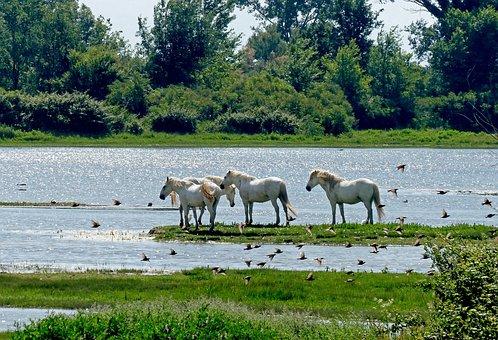 Horses, Waters, Nature, Rural, Summer