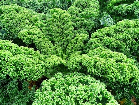 Kale, Vegetables, Green, Plant, Leaf, Nature