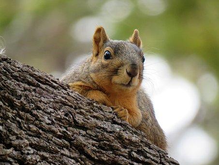Squirrel, Cute, Rodent, Mammal, Nature