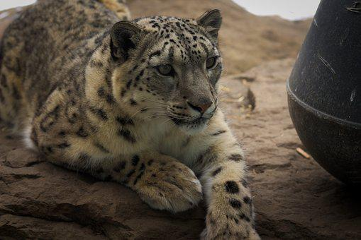 Mammal, Wildlife, Nature, Animal, Cat, Zoo, Fur