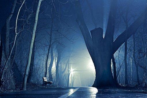 Night, Park, The Fog, Tree, Glow, The Path, Bench, Way