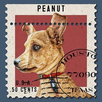 Post, Stamp, Postal, Vintage, Retro, Poster, Dog, Puppy