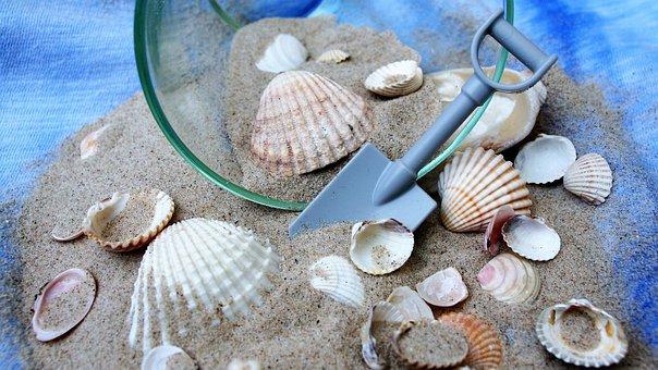 Shells, Dream, Holiday, Imagination, Beach, Sand