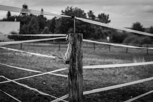 Pen, Belt, Range, Fence, Grass, Countryside, Nature