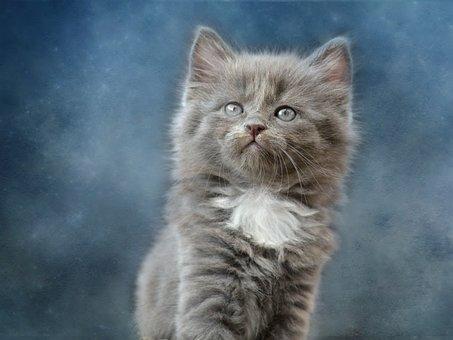Cat, Cute, Mammal, Animal, Fluffy, Portrait, Fur, Grey