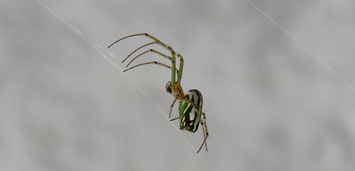 Spider, Insect, Nature, Arachnid, Wild Life, Armenia