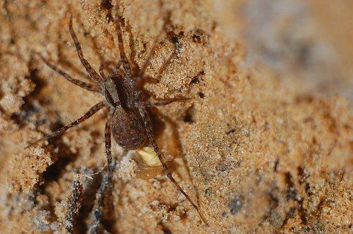 Insect, Nature, Bespozvonochnoe, Spider, Little