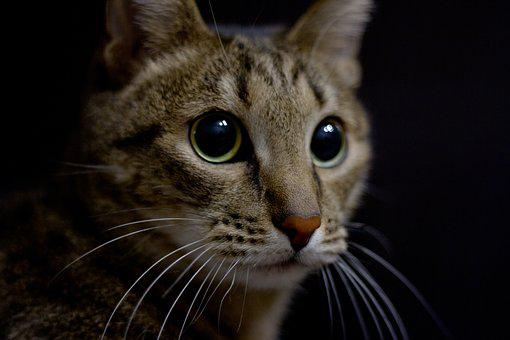 Cute, Mammals, Portrait, Cat, Animals