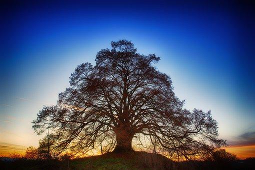 Tree, Nature, Landscape, Dawn, Sky, Blue, Sunset, Dusk