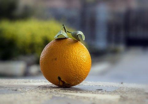 Orange, Citric, Fruit, Food, Nature, Ecological