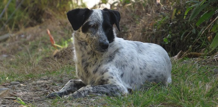 Animalia, Lawn, Nature, Nice, Dog, Armenia