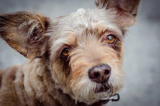 Dog, Animals, Pet, Cute, Mammals, Puppy, Portrait
