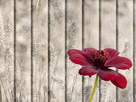 Still Life, Texture, Background, Pattern, Flower