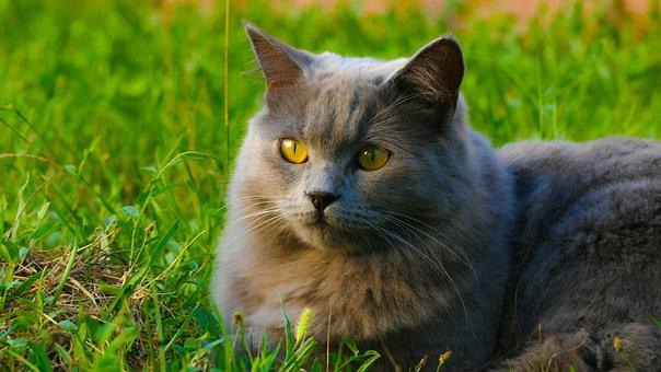 Animal, Cute, Cat, Mammal, Nature, Pet, Grass, Kitten