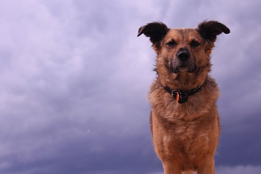 Mammal, Dog, Animal, Pet, Portrait, Cute, Outdoors
